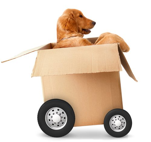 Moving with a Pet into Your Rental Home
