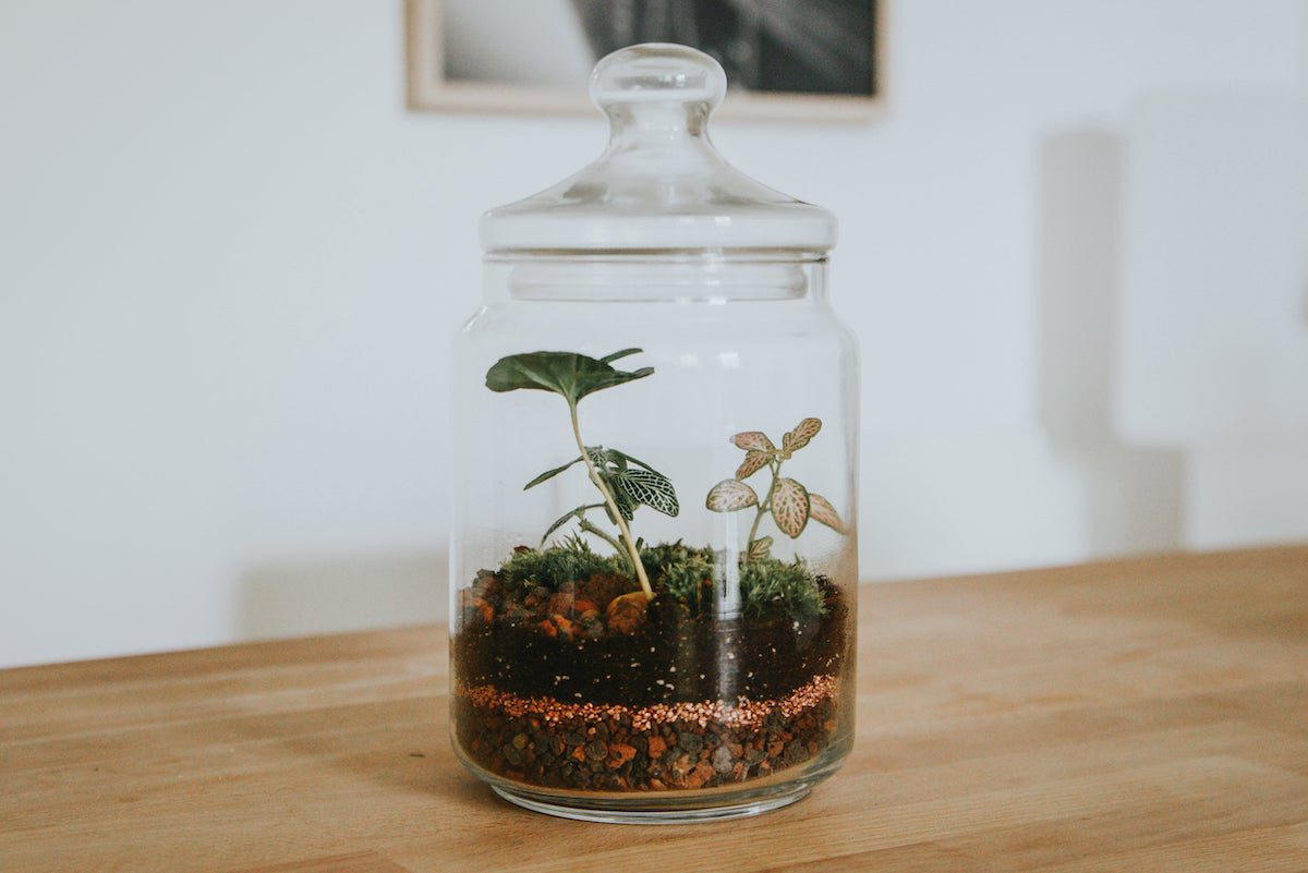 Closed-container terrarium in decorative, glass jar.