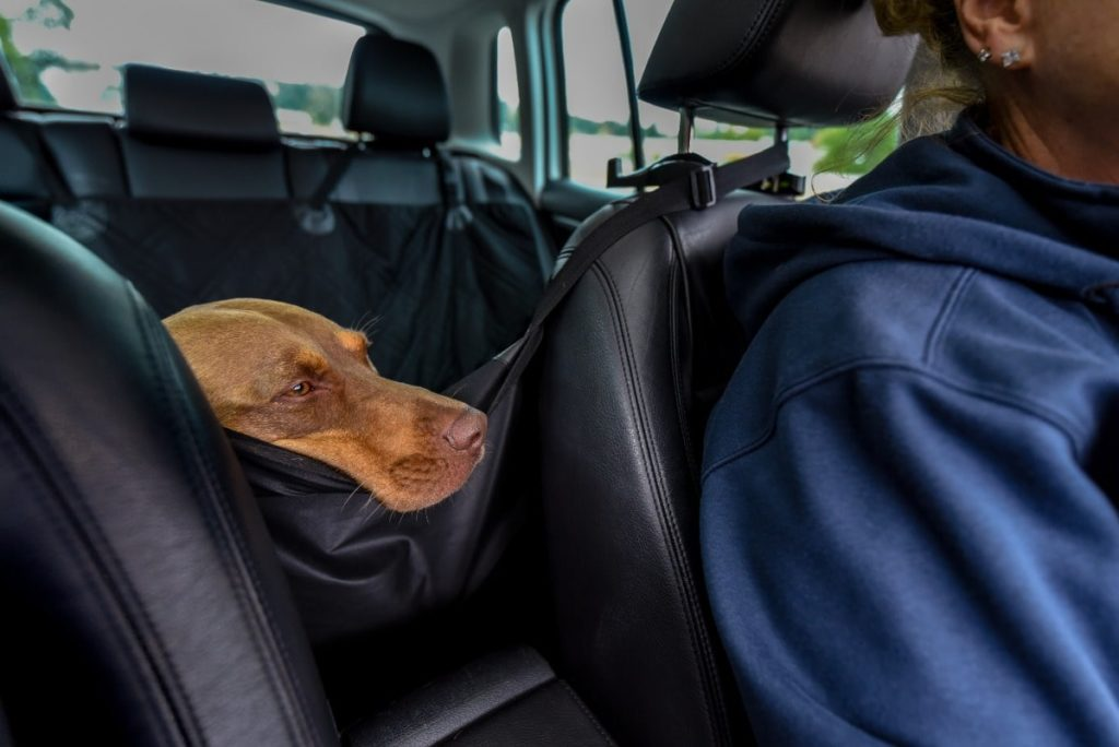 Dog rests part of his head on top of barrier dividing the front seats and the back seats.
