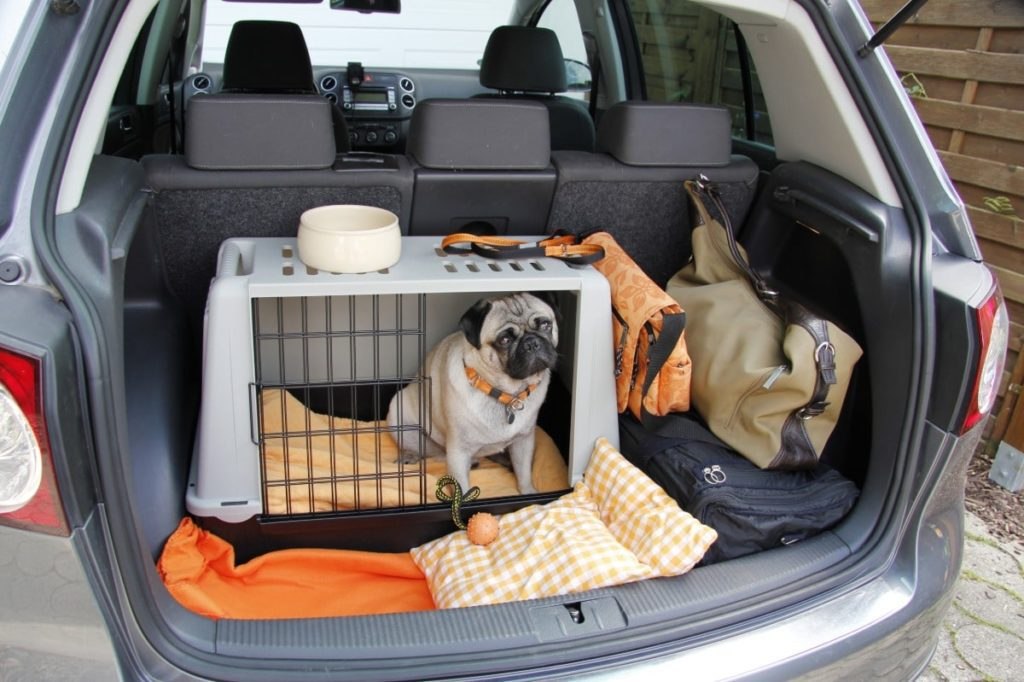 A dog sitting in a crate in the trunk of a vehicle is a great example of dog car safety.