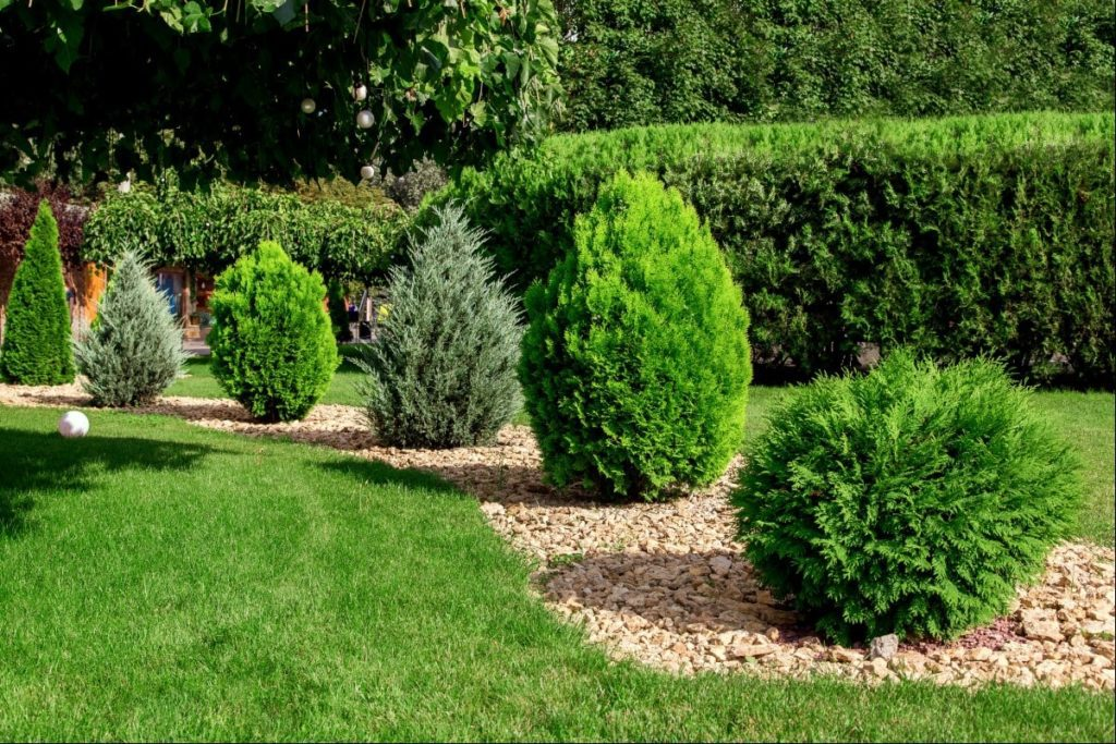 Different types of trees placed in winding pattern and planted in a path of rocks, located in the middle of the yard.
